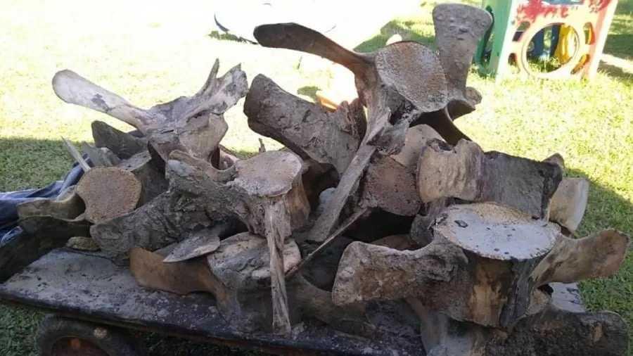 Fin du mystère: un squelette géant disparu retrouvé sur la côte de São Paulo