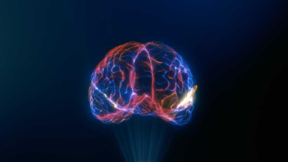 Des scientifiques créent une plate-forme qui propose un voyage à travers le cerveau humain