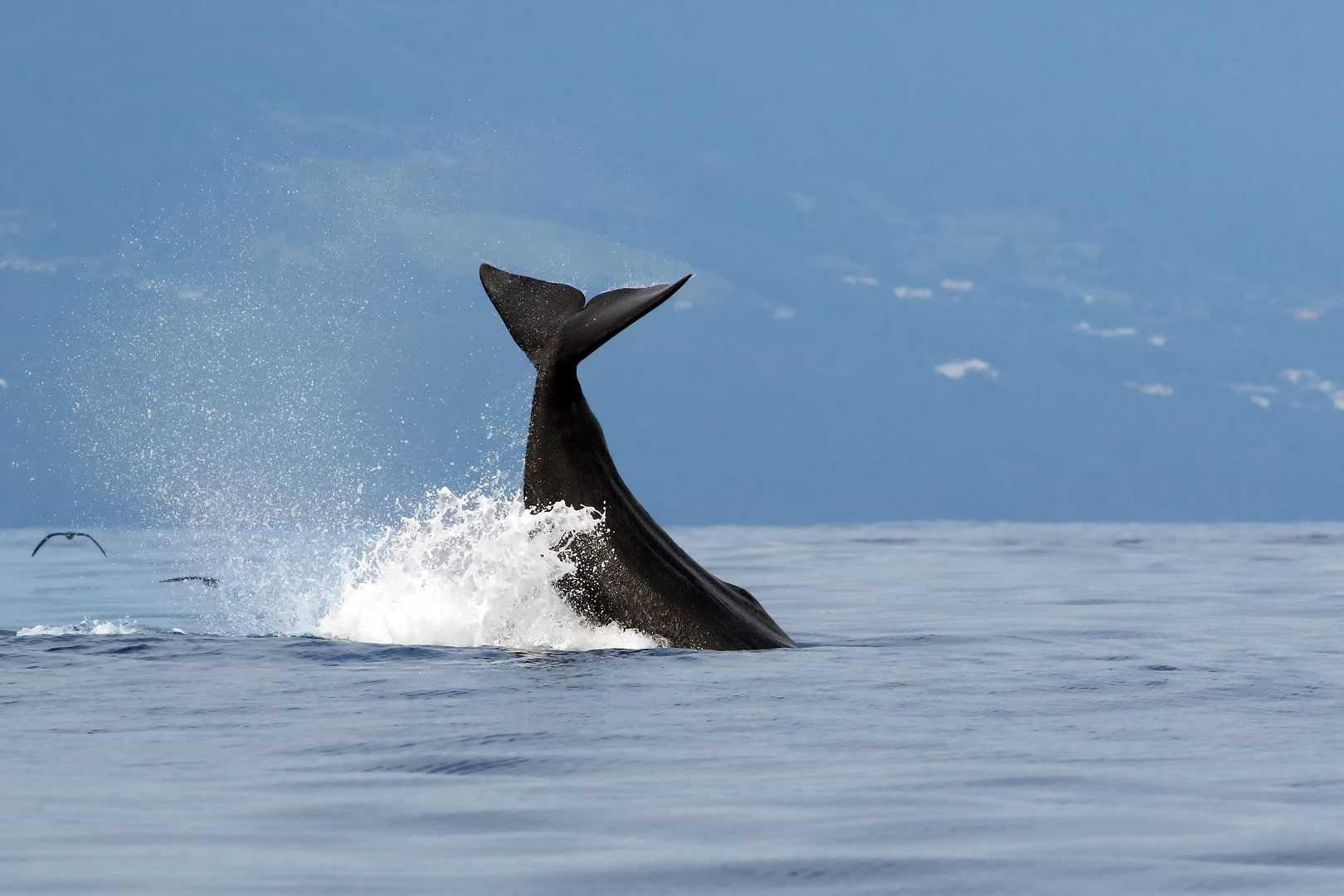 Des pêcheurs yéménites découvrent du vomi de baleine d'une valeur de 10 millions de reais