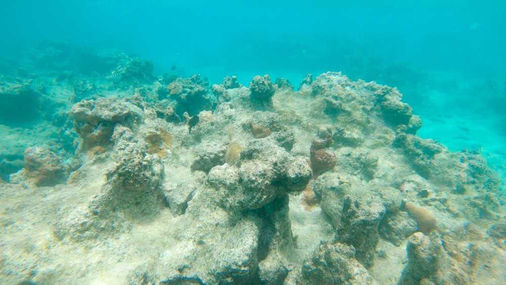 Zones mortes : les régions océaniques à teneur réduite en oxygène existent depuis plus de 1,2 million d'années
