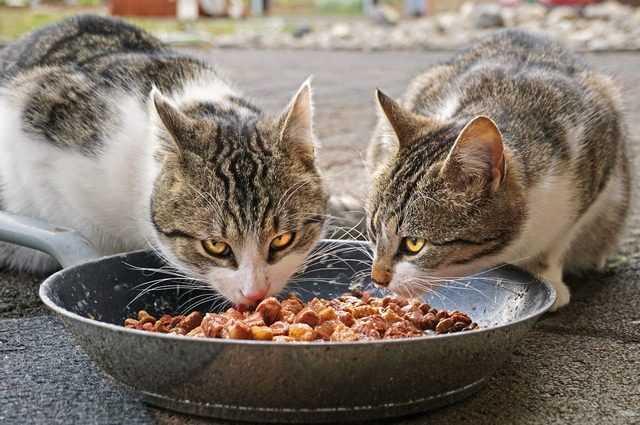 Une vague de pancytopénie féline tue des centaines de chats au Royaume-Uni: qu'est-ce que c'est, quelles sont ses causes et ses symptômes